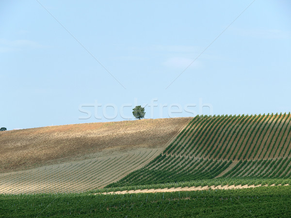 Stock photo: Tuscan landscape in the best edition