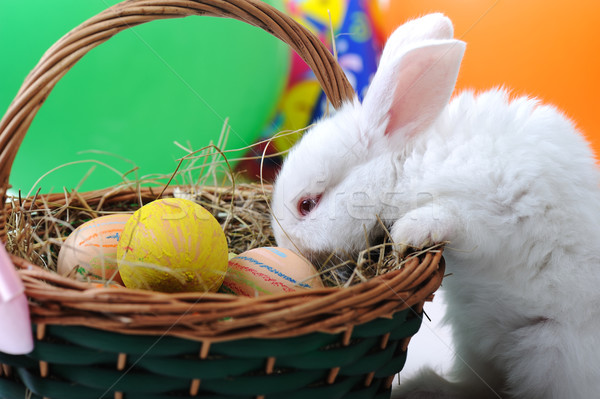 Stock photo: White beautiful rabbit, Easter bunny with eggs in basket
